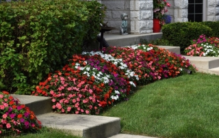 Impatiens Beacon Select Mixture